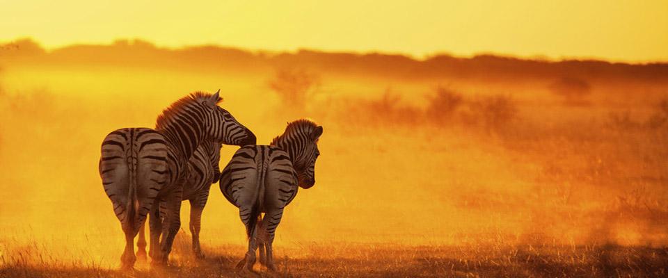 Zebra-Africa.jpg